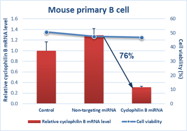 Mouse primary B cell